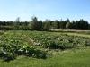 Squash Garden 2